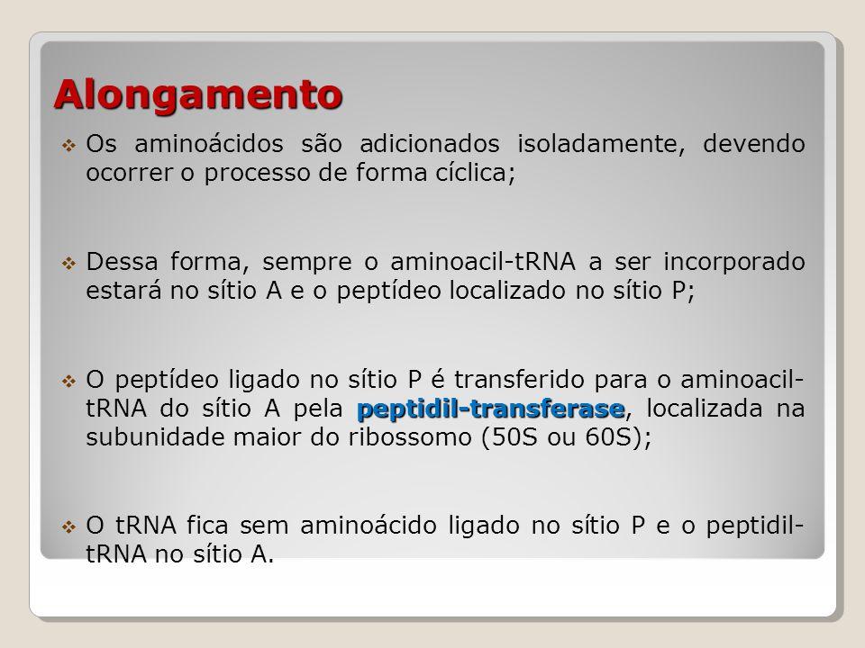 Alongamento Os aminoácidos são adicionados isoladamente, devendo ocorrer o processo de forma cíclica;