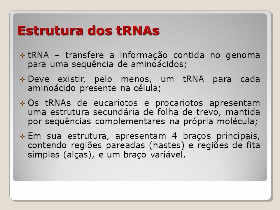 Estrutura dos tRNAs tRNA – transfere a informação contida no genoma para uma sequência de aminoácidos;
