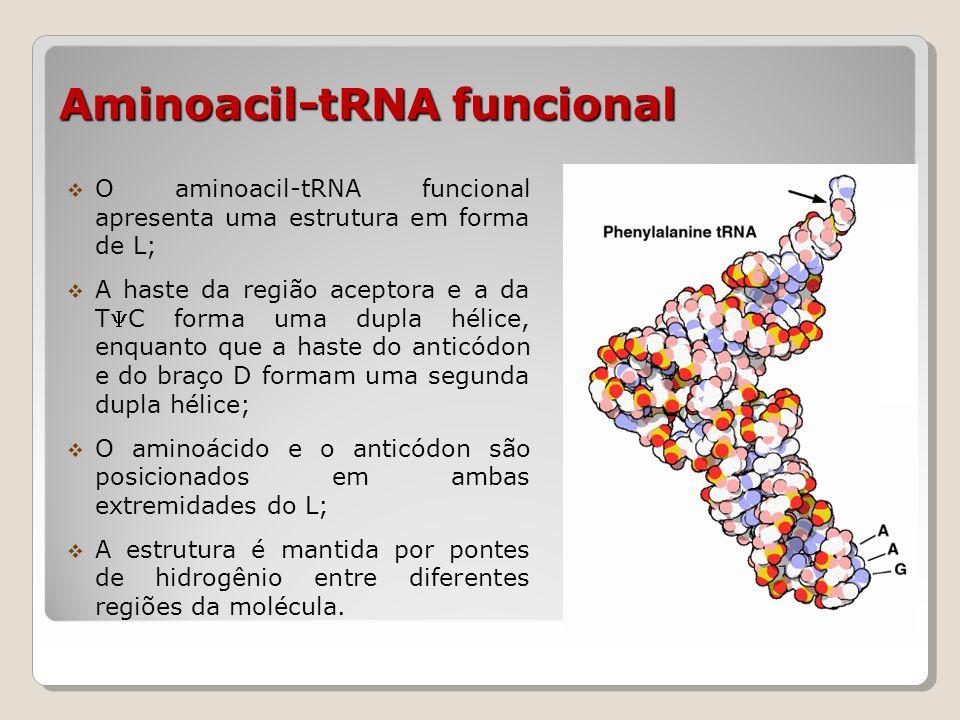 Aminoacil-tRNA funcional