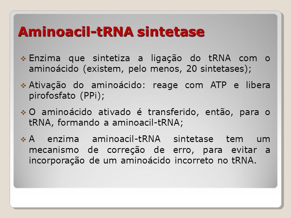 Aminoacil-tRNA sintetase