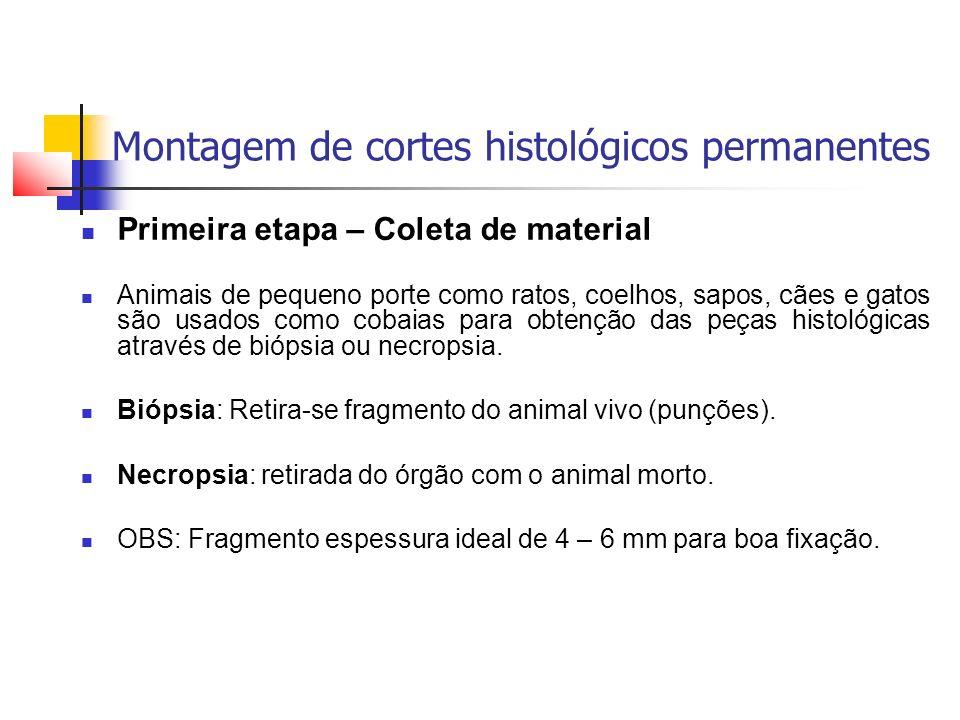 Montagem de cortes histológicos permanentes