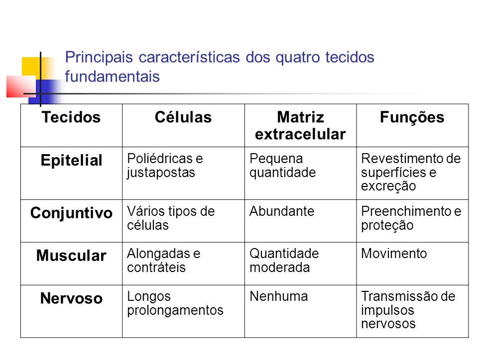 Principais características dos quatro tecidos fundamentais