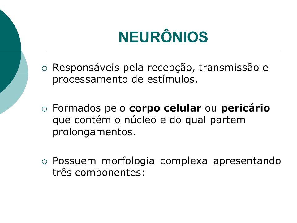 NEURÔNIOS Responsáveis pela recepção, transmissão e processamento de estímulos.