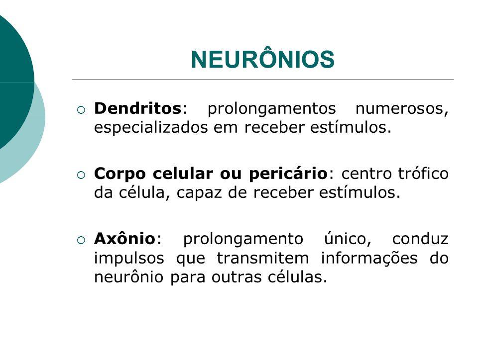 NEURÔNIOS Dendritos: prolongamentos numerosos, especializados em receber estímulos.