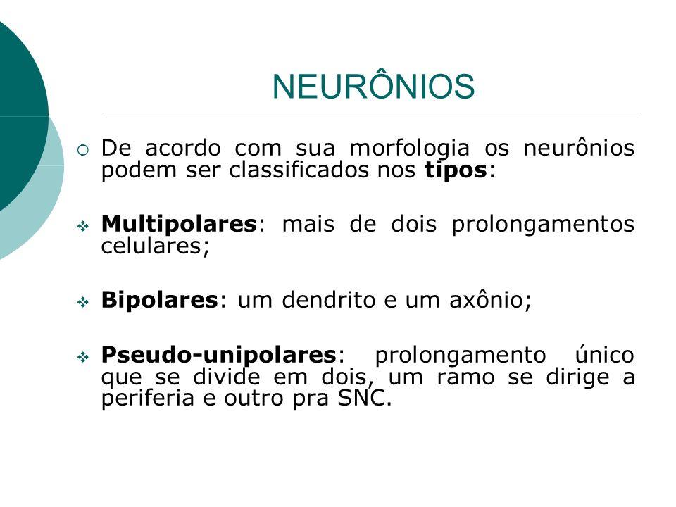 NEURÔNIOS De acordo com sua morfologia os neurônios podem ser classificados nos tipos: Multipolares: mais de dois prolongamentos celulares;