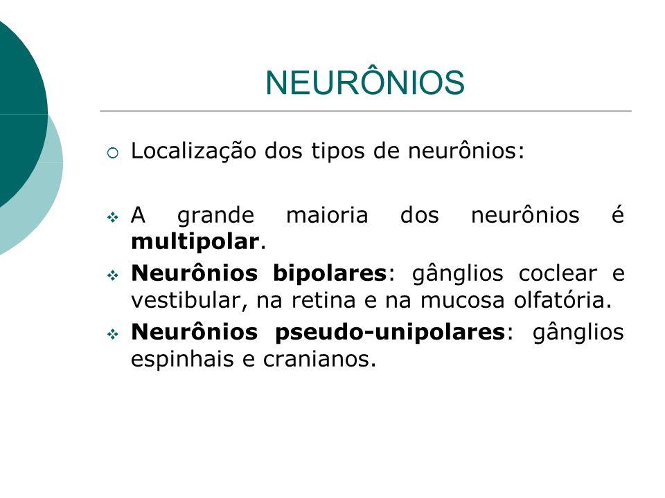 NEURÔNIOS Localização dos tipos de neurônios: