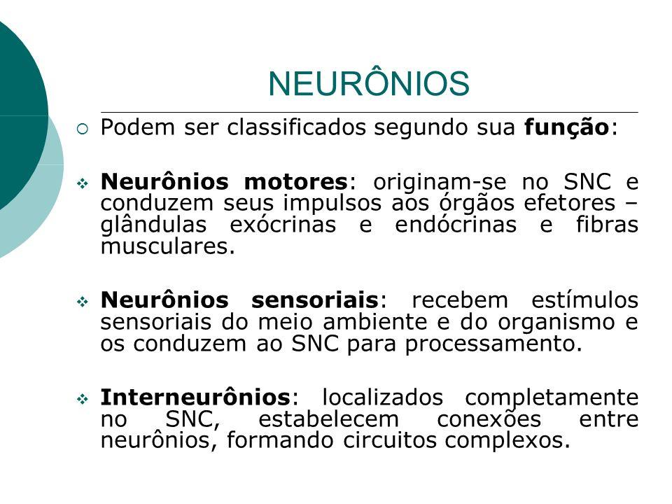 NEURÔNIOS Podem ser classificados segundo sua função: