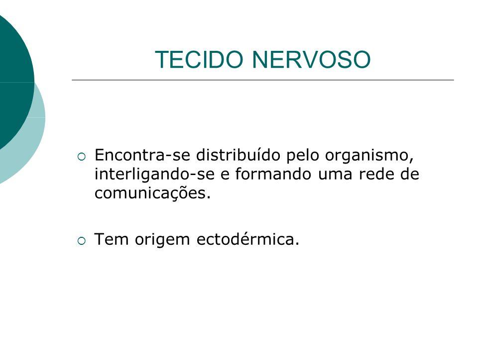 TECIDO NERVOSO Encontra-se distribuído pelo organismo, interligando-se e formando uma rede de comunicações.