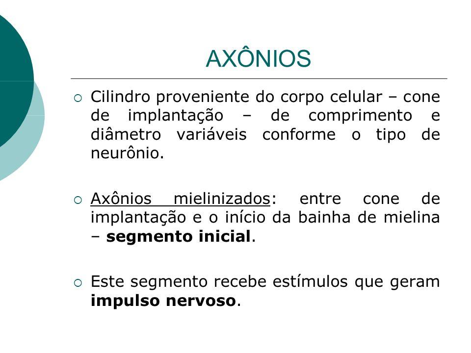 AXÔNIOS Cilindro proveniente do corpo celular – cone de implantação – de comprimento e diâmetro variáveis conforme o tipo de neurônio.