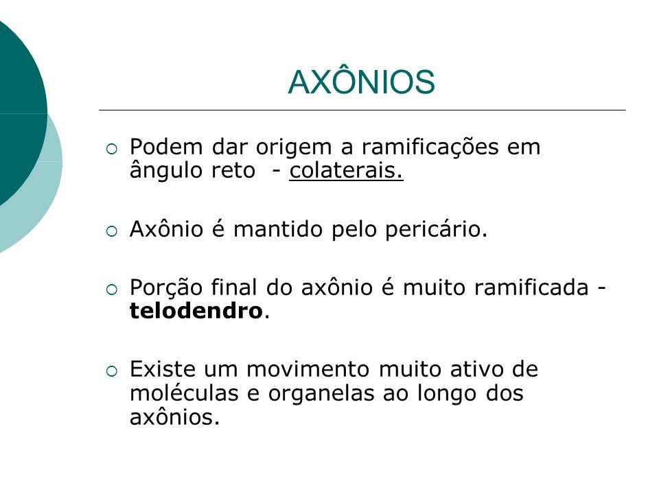 AXÔNIOS Podem dar origem a ramificações em ângulo reto - colaterais.