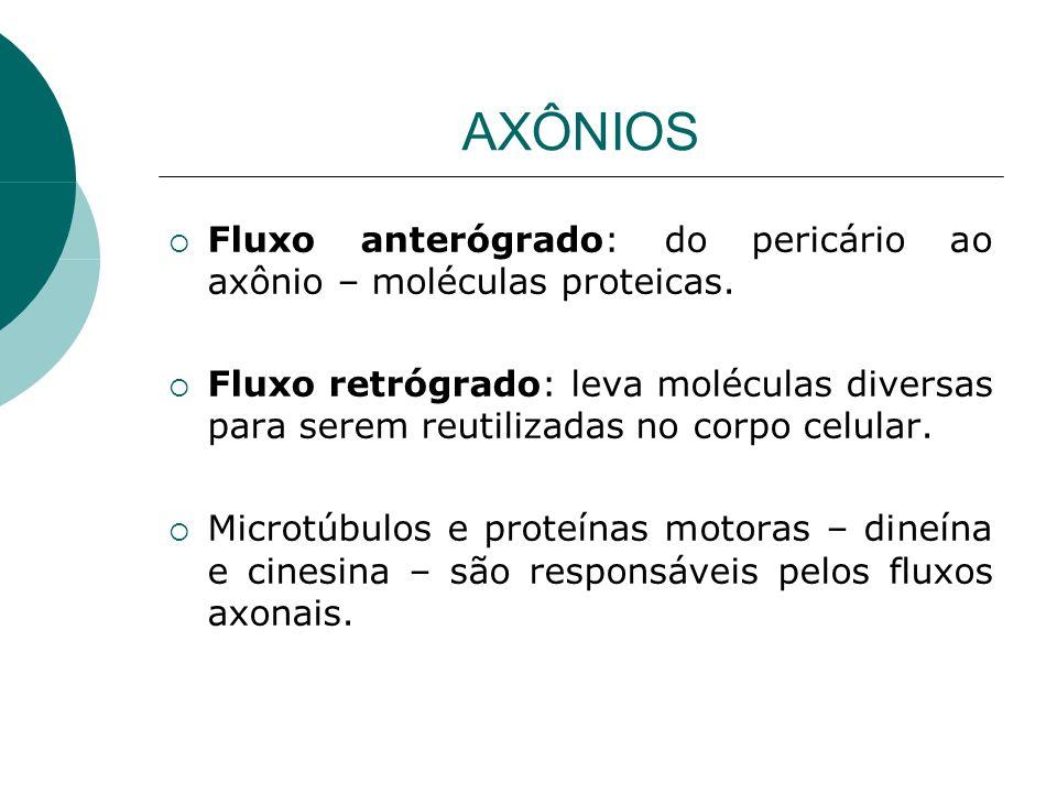 AXÔNIOS Fluxo anterógrado: do pericário ao axônio – moléculas proteicas.