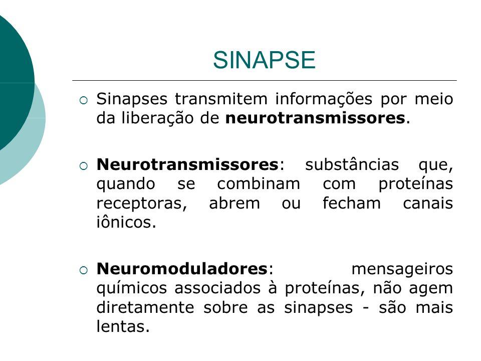 SINAPSE Sinapses transmitem informações por meio da liberação de neurotransmissores.