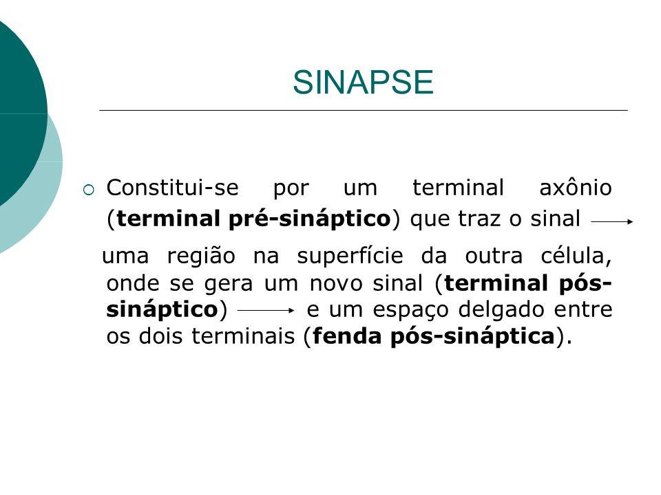 SINAPSE Constitui-se por um terminal axônio (terminal pré-sináptico) que traz o sinal.