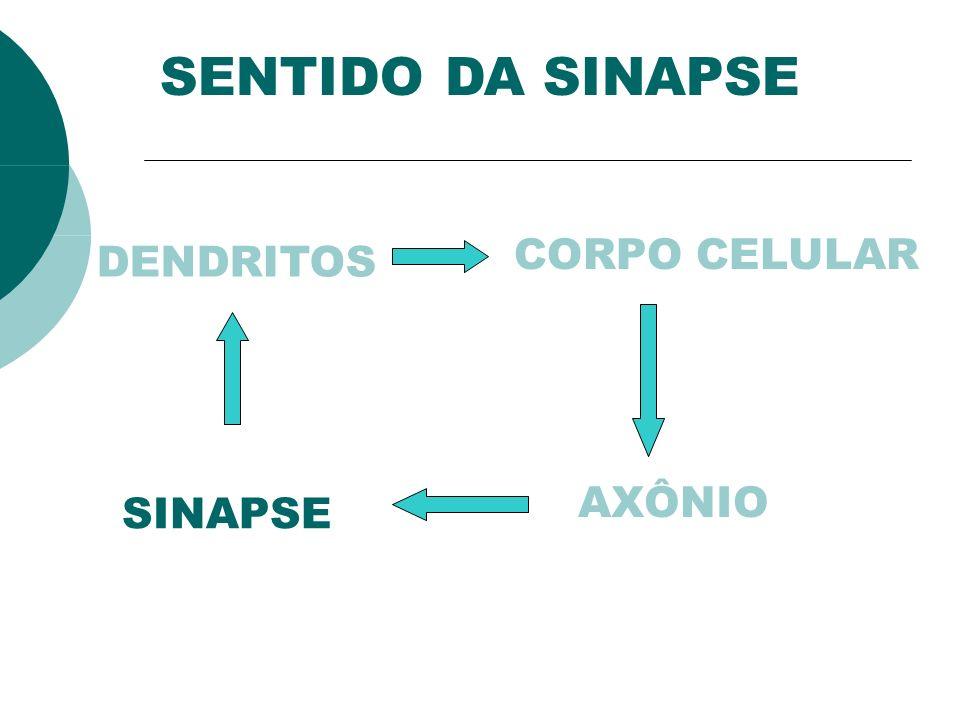 SENTIDO DA SINAPSE CORPO CELULAR DENDRITOS AXÔNIO SINAPSE