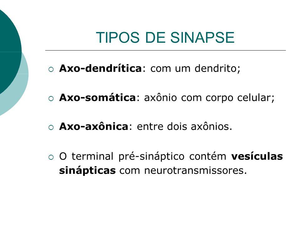 TIPOS DE SINAPSE Axo-dendrítica: com um dendrito;