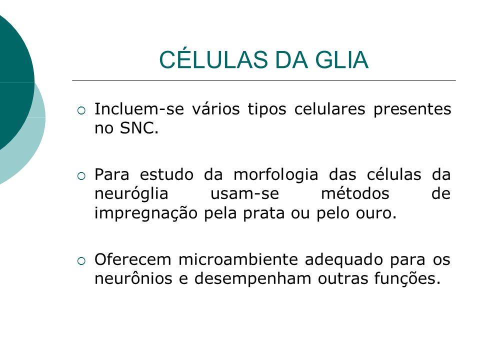 CÉLULAS DA GLIA Incluem-se vários tipos celulares presentes no SNC.