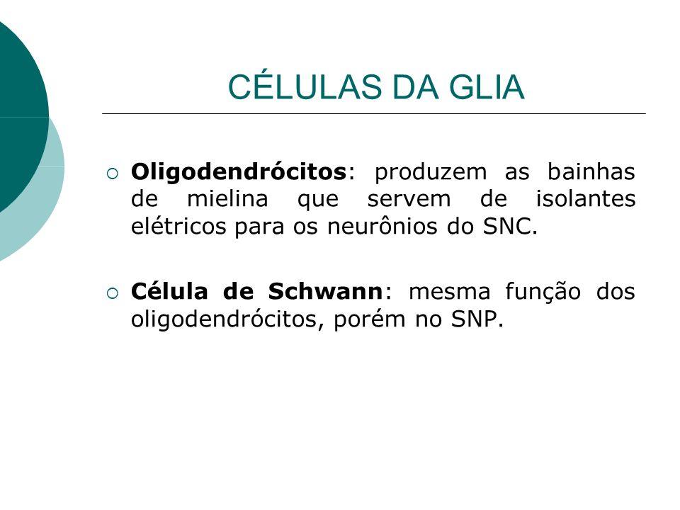 CÉLULAS DA GLIA Oligodendrócitos: produzem as bainhas de mielina que servem de isolantes elétricos para os neurônios do SNC.