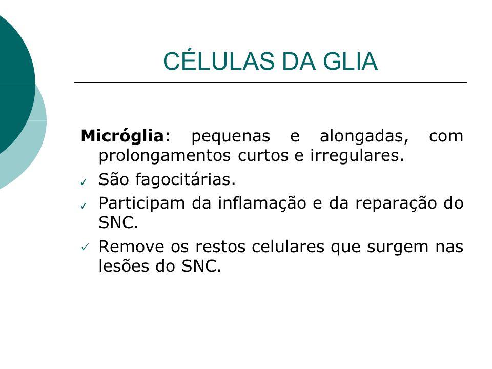 CÉLULAS DA GLIA Micróglia: pequenas e alongadas, com prolongamentos curtos e irregulares. São fagocitárias.