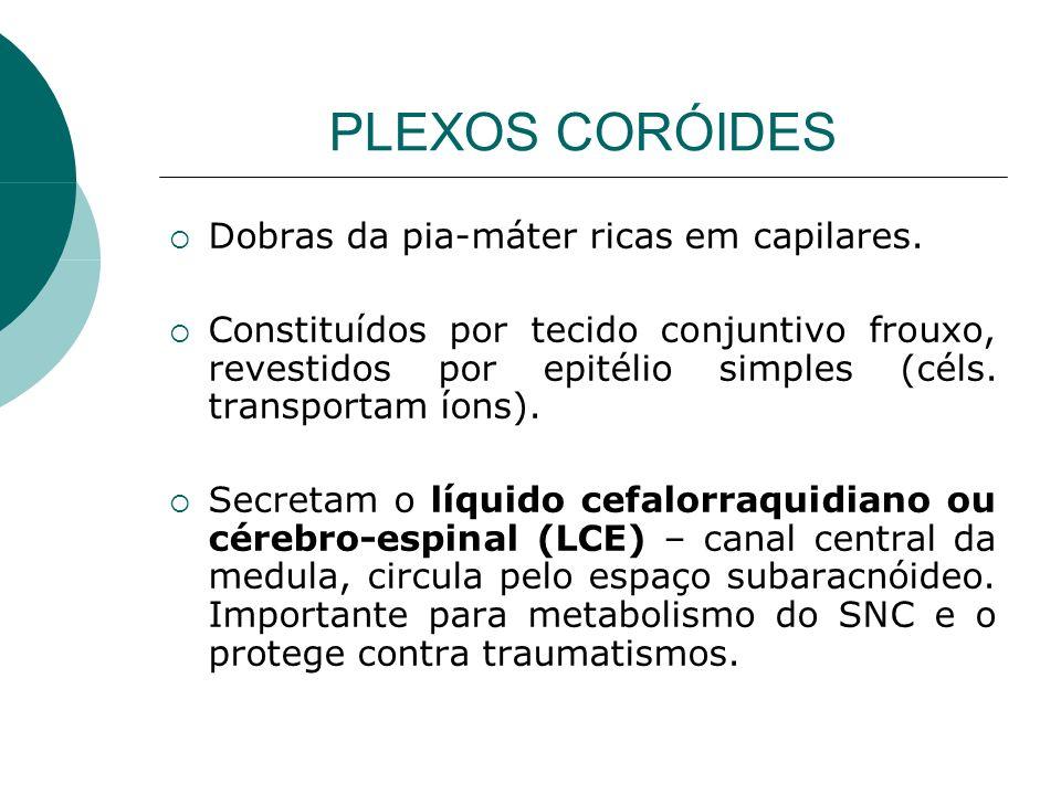PLEXOS CORÓIDES Dobras da pia-máter ricas em capilares.