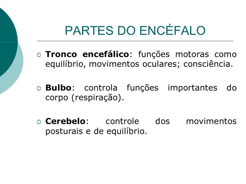 PARTES DO ENCÉFALO Tronco encefálico: funções motoras como equilíbrio, movimentos oculares; consciência.