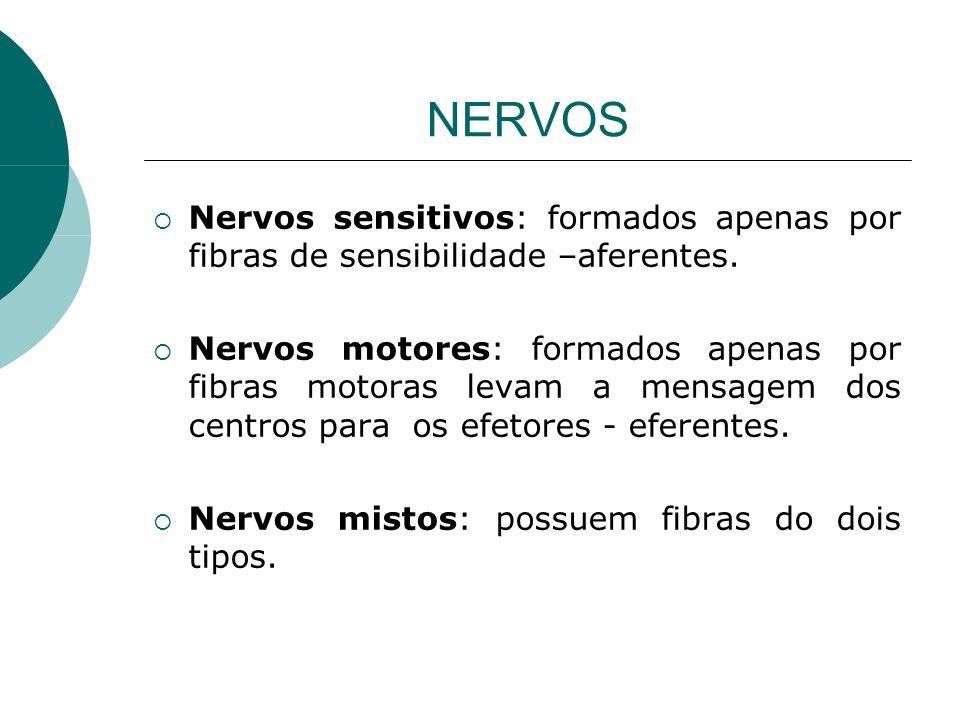 NERVOS Nervos sensitivos: formados apenas por fibras de sensibilidade –aferentes.