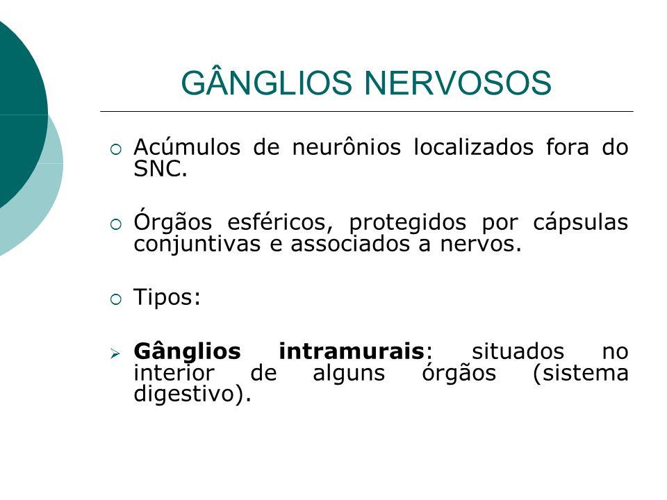 GÂNGLIOS NERVOSOS Acúmulos de neurônios localizados fora do SNC.