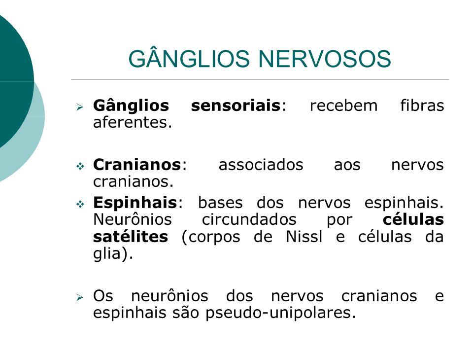 GÂNGLIOS NERVOSOS Gânglios sensoriais: recebem fibras aferentes.