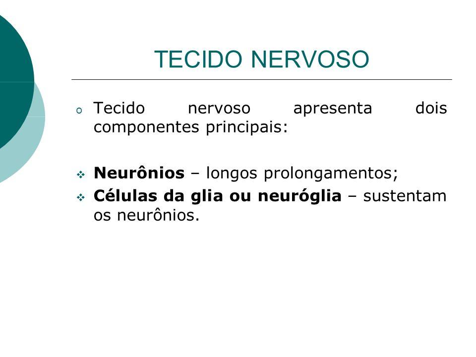 TECIDO NERVOSO Tecido nervoso apresenta dois componentes principais: