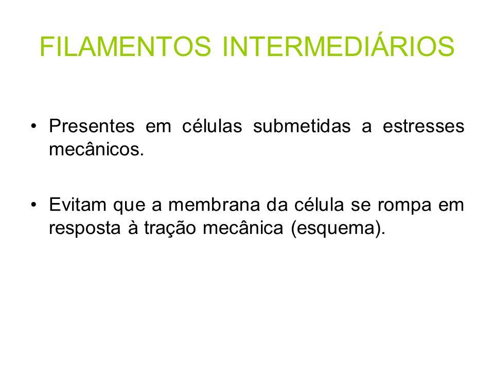 FILAMENTOS INTERMEDIÁRIOS