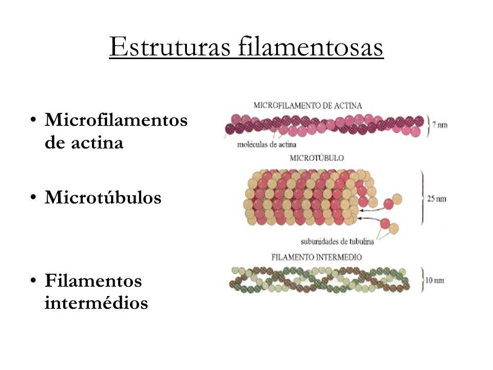 Estruturas filamentosas