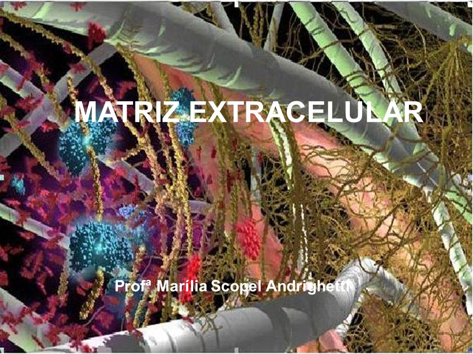 MATRIZ EXTRACELULAR Profª Marília Scopel Andrighetti