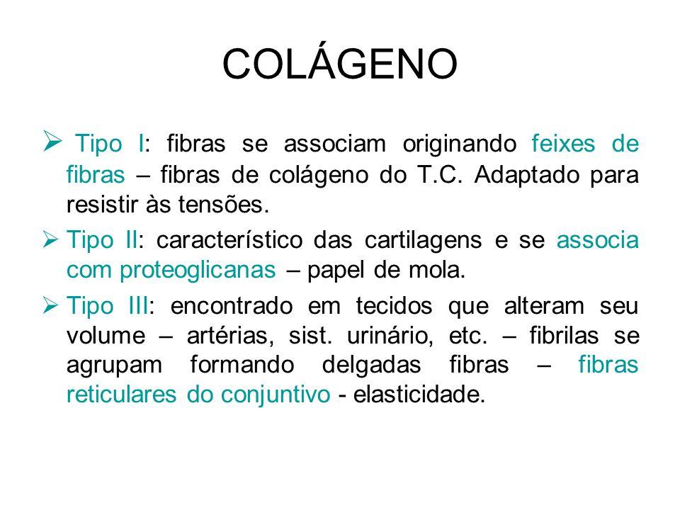 COLÁGENO Tipo I: fibras se associam originando feixes de fibras – fibras de colágeno do T.C. Adaptado para resistir às tensões.