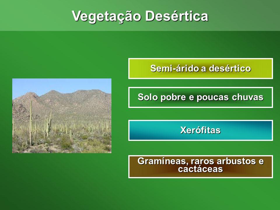 Vegetação Desértica Semi-árido a desértico Solo pobre e poucas chuvas
