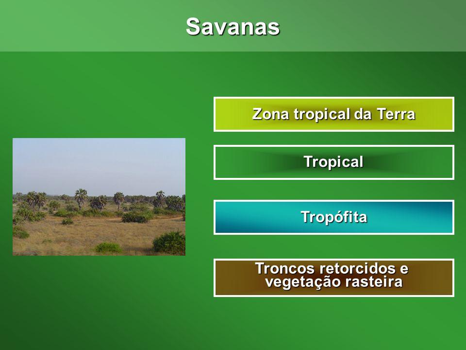 Savanas Zona tropical da Terra Tropical Tropófita Troncos retorcidos e