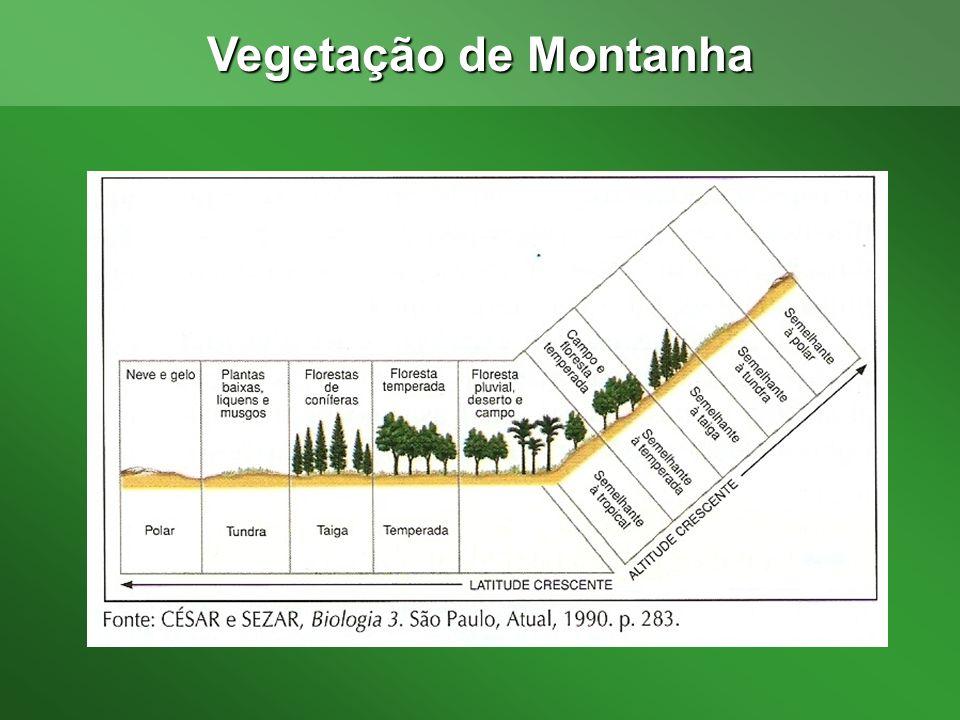 Vegetação de Montanha