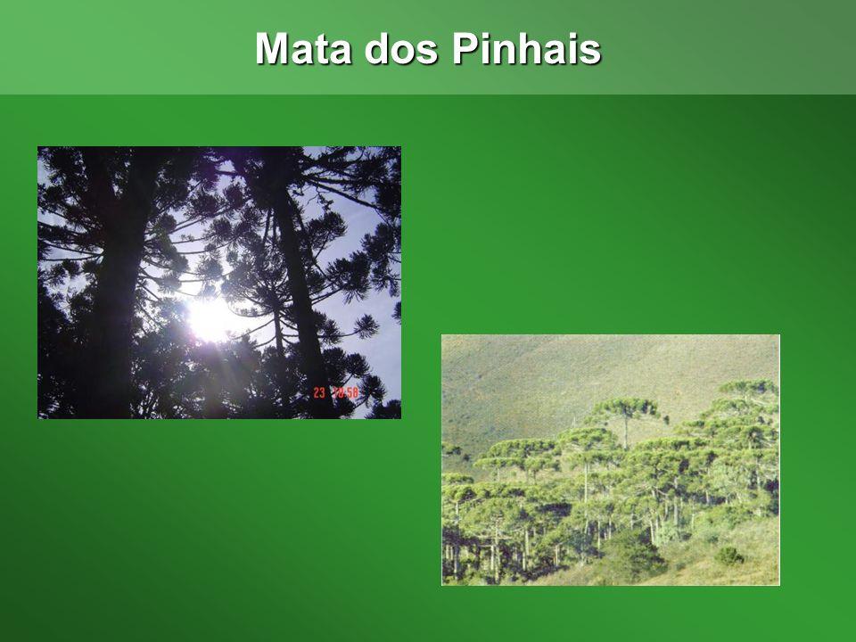 Mata dos Pinhais