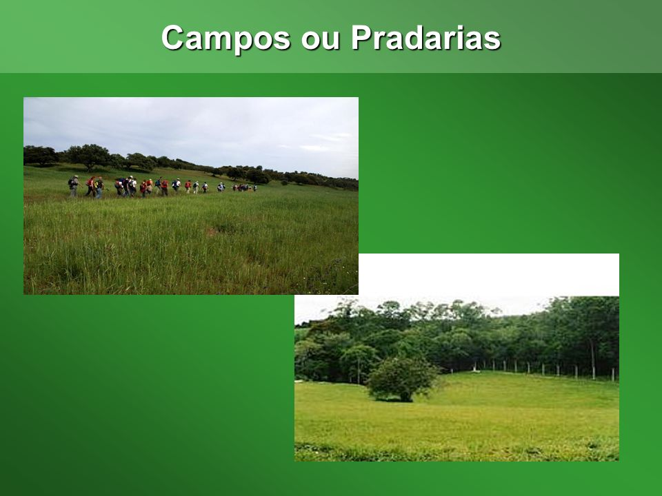 Campos ou Pradarias