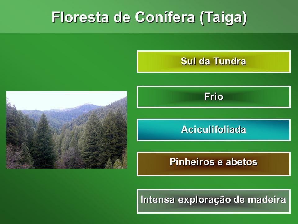 Floresta de Conífera (Taiga) Intensa exploração de madeira