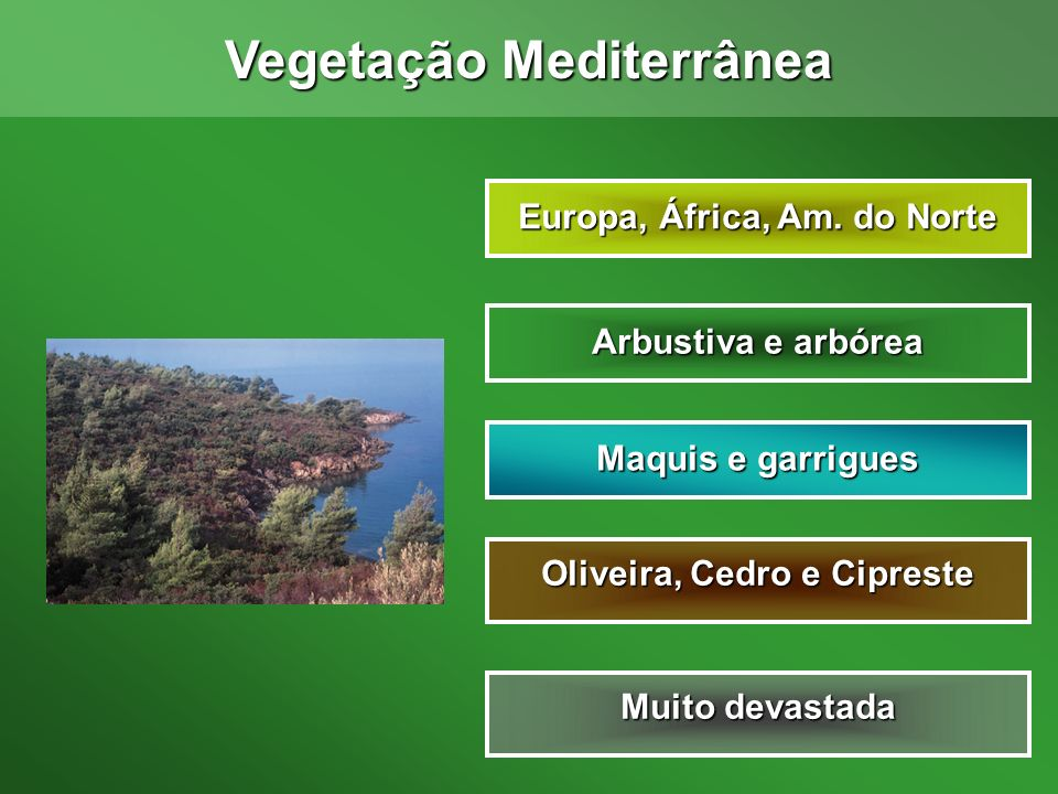 Vegetação Mediterrânea