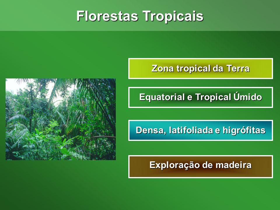 Equatorial e Tropical Úmido Densa, latifoliada e higrófitas