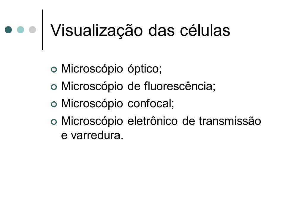 Visualização das células