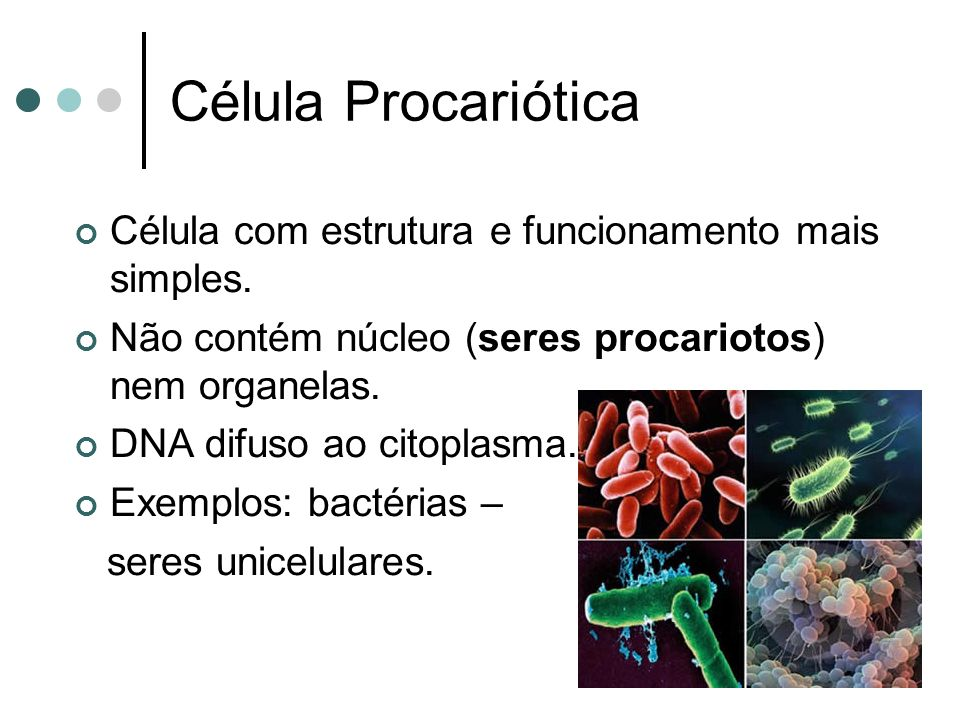 Célula Procariótica Célula com estrutura e funcionamento mais simples.