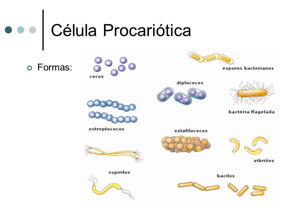 Célula Procariótica Formas: