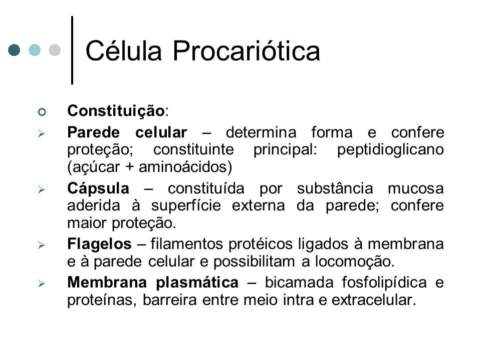Célula Procariótica Constituição: