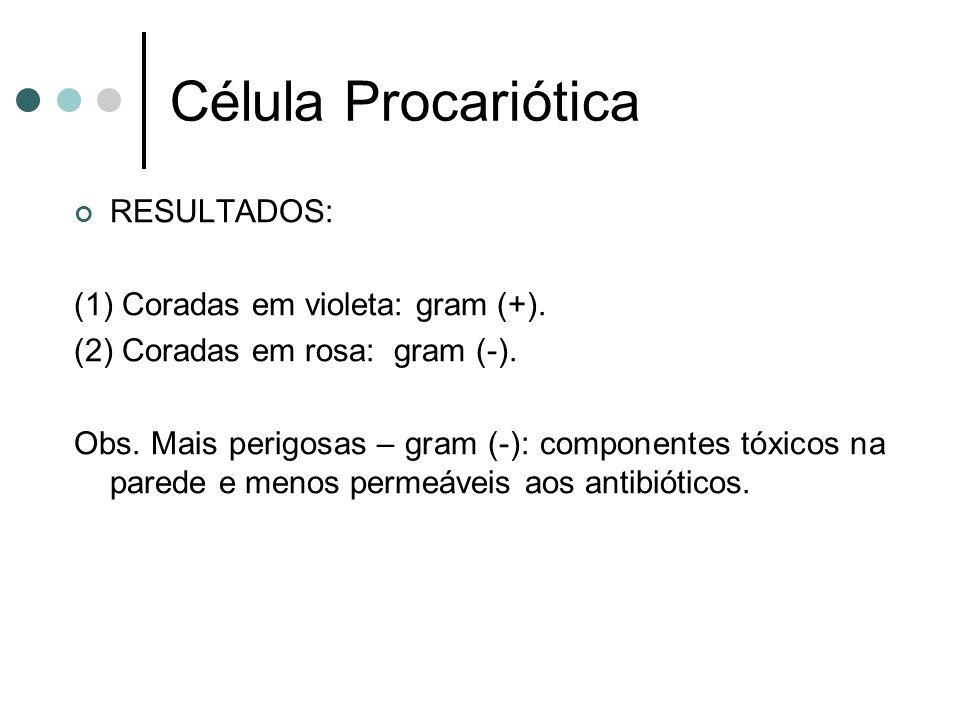 Célula Procariótica RESULTADOS: (1) Coradas em violeta: gram (+).
