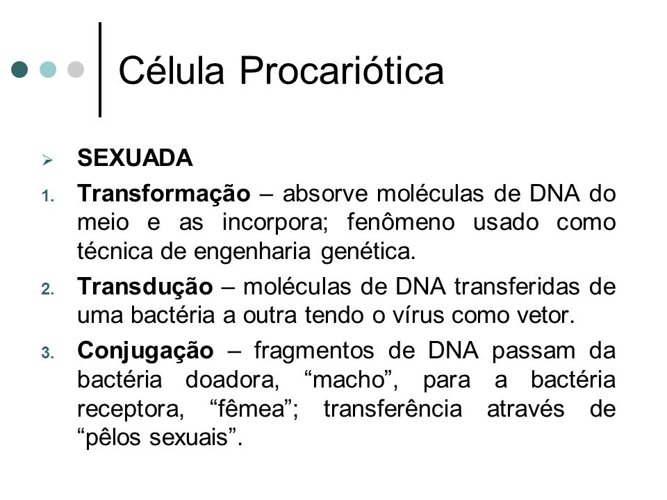 Célula Procariótica SEXUADA