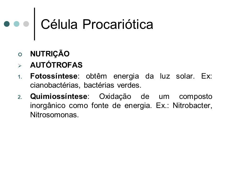 Célula Procariótica NUTRIÇÃO AUTÓTROFAS