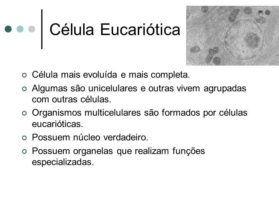 Célula Eucariótica Célula mais evoluída e mais completa.
