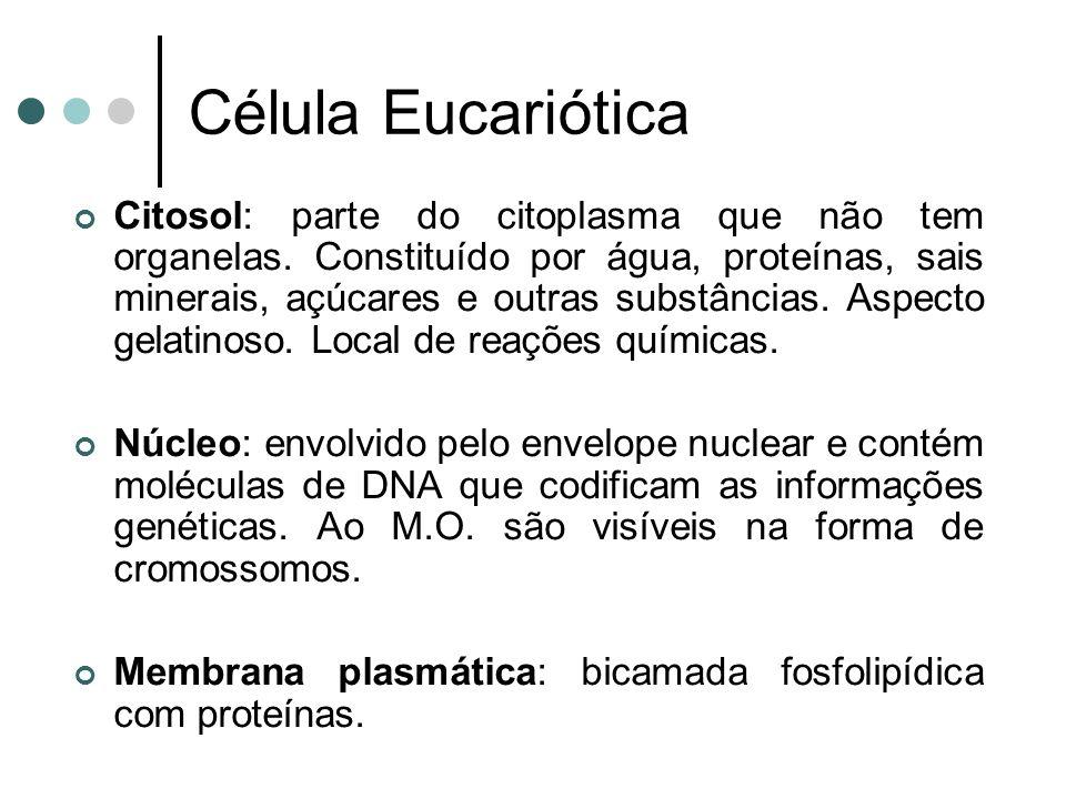 Célula Eucariótica