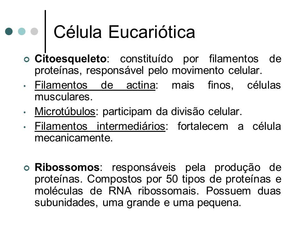 Célula Eucariótica Citoesqueleto: constituído por filamentos de proteínas, responsável pelo movimento celular.